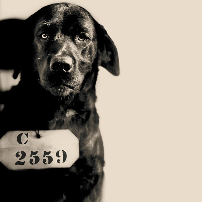 Pep em foto com placa identificadora típica de detentos